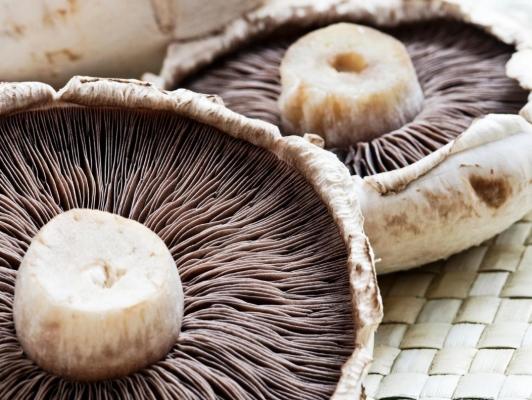 فواید قارچ خوراکی برای بدن قارچ های خوراکی منبع خوبی از فیبر و اسیدهای چرب اشباع نشده هستند، اما دارای کالری پایینی می باشند و این ممکن است که عجیب به نظر برسد، اما قارچ ها می توانند برای پوست هم مفید باشند قارچ یکی از سبزیهایی است که به تقویت سیستم ایمنی بدن کمک می کند اما راه استفاده از این خواص تنها انتخاب صحیح قارچ است که پیشنهاد می شود برای خرید قارچ باید محتاط باشید و آن را از فروشگاه های معتبر تهیه کنید. شما خریداران محترم در هر نقطه از ایران و در هر زمان می توانید تنها با چند کلیک هر نوع محصول غذایی را بصورت آنلاین و آسان از سایت چاشنی بازار خریداری نمایید. بعضی از قارچ ها، اسیدکجیک دارند و یک روشن کننده طبیعی برای پوست است. این اسید، تولید ملانین بر سطح پوست را کاهش می دهد. سلول های جدید پوست را که بعد از لایه برداری سلول های مرده تشکیل شده اند، روشن می کند. این ماده، جایگزین عالی ای برای روشن کننده های شیمیایی سمی مانند هیدروکینین که خطر ایجاد سرطان را دارد، است. قارچ، دارای خواص ضدپیری است. اسیدکوجیک، در لوسیون ها و سرم ها به عنوان درمانی برای علائم پیری مانند لکه های کبد، لکه های پیری، تغییر رنگ و رنگ پوست نامناسب ناشی از آسیب نوری، استفاده می شود. قارچ حاوی مس است، که برای موهای شما بسیار مفید است. زیرا جذب آهن از غذا را آسان می کند. مس در تولید ملانین، نقش دارد. ملانین، بر رنگ مو اثرمی کند. قارچ، دارای مقادیر فراوان آهن نیز هست. قارچ، هیچ گونه چربی ندارد و دارای کربوهیدارات کم، پروتئین بالا، آنزیم ها، ویتامین ها، مواد معدنی و فیبر است. بنابراین، برای بیماران دیابتی، عالی است. همه می دانند برای کاهش چربی و کلسترول، باید چربی اضافی که برای هضم پروتئین ها در بدن به کارمی رود را بسوزانید. در زمان رژیم، همیشه، رژیم غذایی با پروتئین بالا، کربوهیدرات پایین و بدون چربی که همگی از خواص قارچ هستند، توصیه می شود. قارچ ها بسیار غنی از ویتامین ب هستند، که معمولا به عنوان فولات نیز شناخته می شوند و بر تشکیل گلبولهای سفید در گلبولهای قرمز در مغز استخوان کمک می کند. اگر شما یک مرد مبتلا به سرطان پروستات هستید، باید قارچ دکمه ای را به طور منظم مصرف کنید. این قارچ می تواند اندازه تومور را کاهش دهد و از ضعف و گسترش آن جلوگیری کند. کسانی که سرطان پروستات ندارند نیز می توا